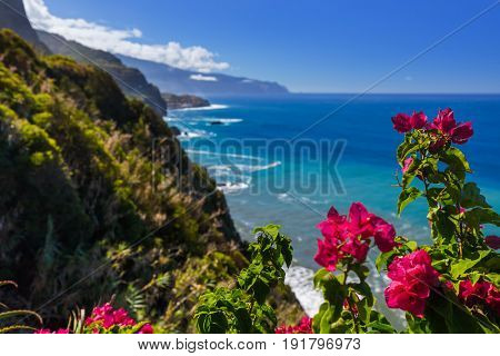 Flowers on coast in Boaventura - Madeira Portugal - travel background