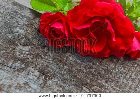 Burgundy rose in the corner on wooden brown background