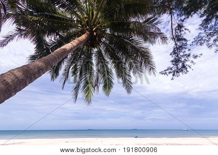 The topical beach and coconut tree with huge cloud in the sky