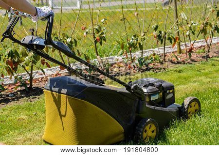 Gardener cuts the lawn with a lawnmower in the garden