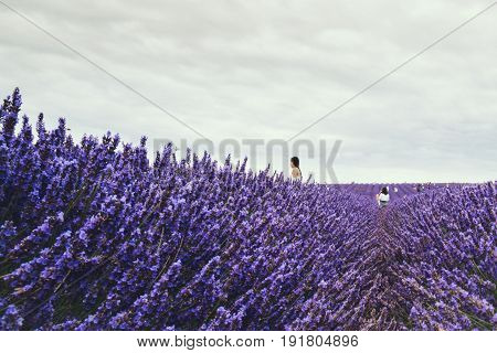 HITCHIN, UK - AUGUST 1, 2016: Landscape view of Hitchin lavender field and visitors. Lavender farm is a local attraction and is close to both London and Cambridge.