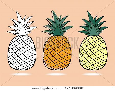 Three pineapple simply draw style .Vector illustration