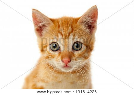 Beautiful small red cat looking at camera isolated on a white background