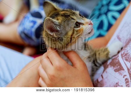 Holding A Kitten On A Ginger Hand On A White Background