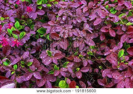 Pink and Green petals after a fresh rain soak
