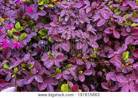 Pink and Green petals after a rain soak
