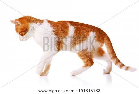 Cute funny cat isolated on white background