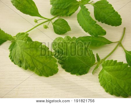 Aztec sweet herb with leaves on wooden board
