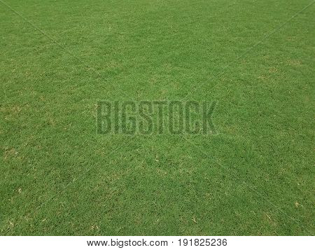 cut and maintained green grass on a soccer field poster