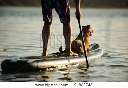 Mix breed dog lying down on stand up paddleboard while man paddles through water