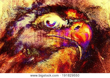 Eagle on abstract color background. Profile portratit. Fire effect