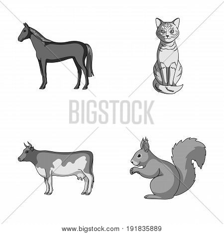 Horse, cow, cat, squirrel and other kinds of animals.Animals set collection icons in monochrome style vector symbol stock illustration .