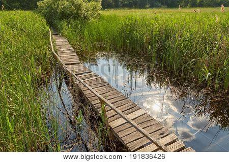 Swampland walkway wooden board path
