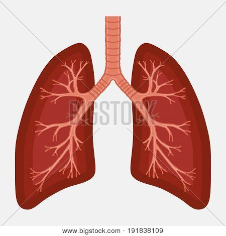 human lung anatomy diagram. illness respiratory cancer graphics.respiratory systems.