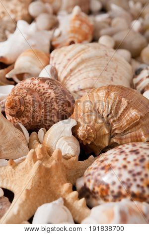 Seashells and sea pebbles background. Natural seashore stones textured surface