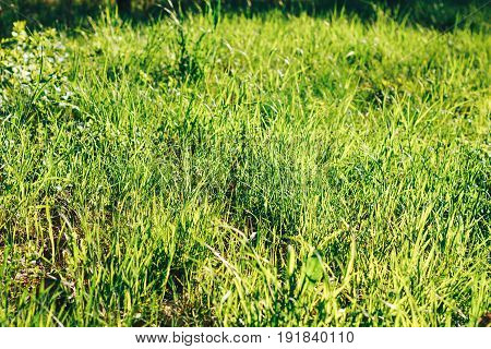 Grass Sun Soft Focus Abstract Nature Background