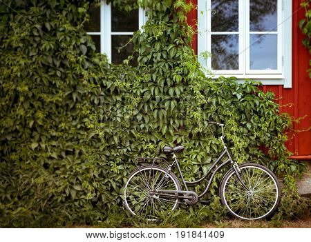 Bicycle with green foliage wall and red house in background. Sweden Scandinavia Europe