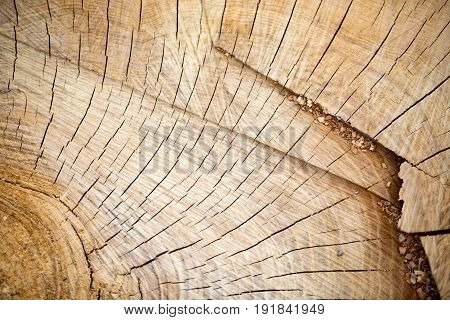 Tree ring rog wood slice close up details