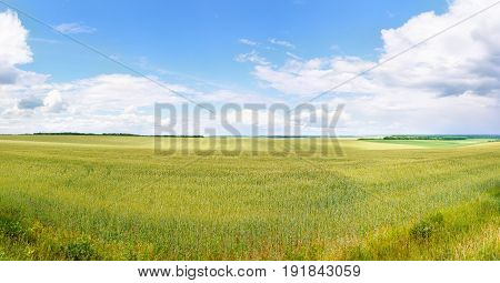 panoramic photo of green wheat field. Summer landscape. Agricultural concept