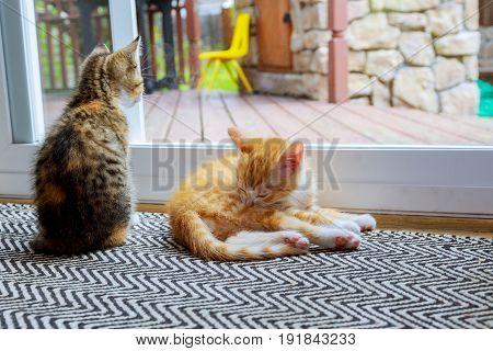 Cat Relaxing And Door