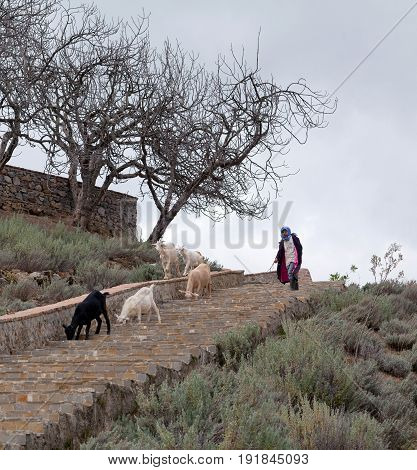 CHEFCHAOUEN, MOROCCO - JANUARY 2, 2014: Girl drover with goats walking on the road to pasture