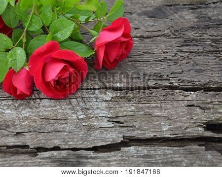 three Burgundy roses on wooden background with multiple cracks