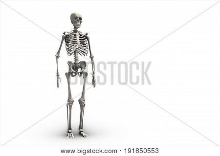 Illustration Of A Human Skeletal System 3D Illustration