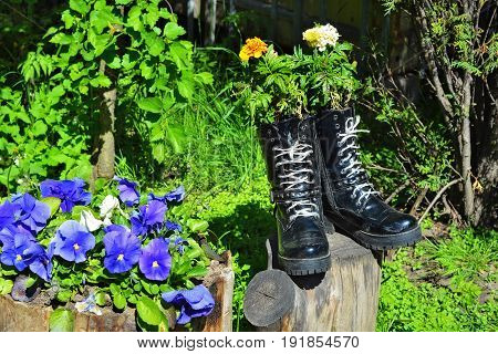 Decorative flowers planted in old shoes in the Tauride Garden in the city of Saint-Petersburg.