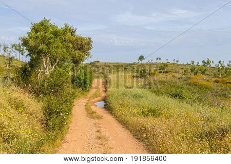 Trail In Vale Seco,  Santiago Do Cacem
