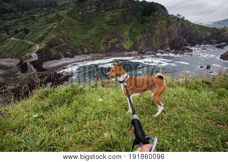Cute little puppy of basenji breed is exploring a nature hike together with owner overlooking cliffs and rocks in northern spain
