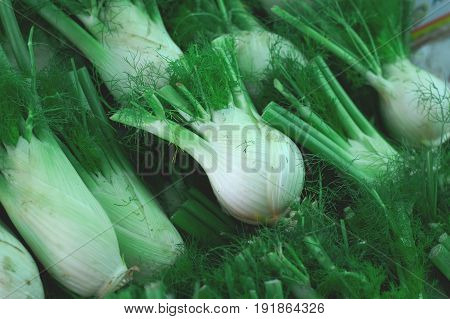Fennel Bulbs With Green Leaves For Sale On Farmer's Market. Full Of Vitamins. Agriculture Background
