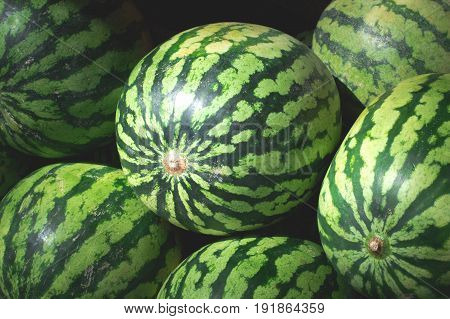 Watermelons Sweet For Sale On Farmer's Market. Agriculture Background. Top View. Close-up