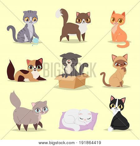 Cute cats kitty pet adorable character different pose vector. Home cats different breeds.
