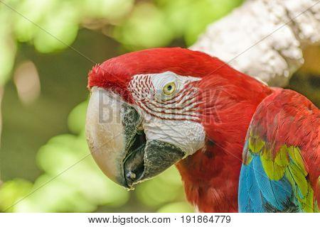 Ecuadorian Parrots At Zoo, Guayaquil, Ecuador