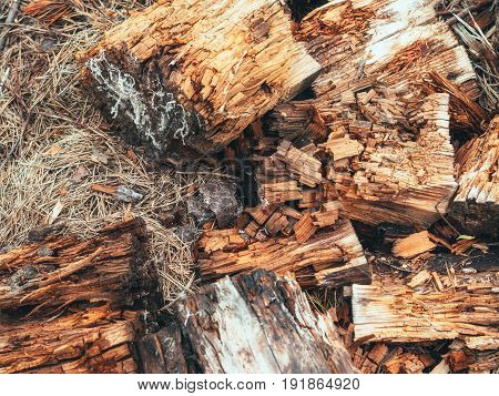 Sawdust from felled trees. The tree is broken. The problem of conservation of nature. For advertising text or messages