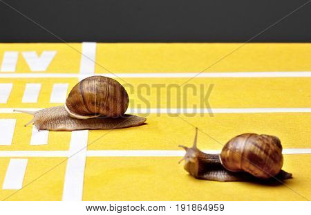 Snails Race On Sports Track Near The Finish Line..concept Of Victory.slowly But Surely