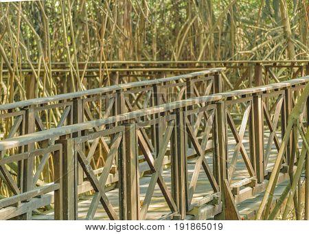 Mangle Tree Road At Zoo, Ecuador