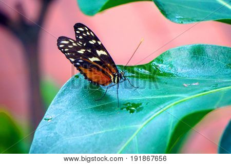 A butterfly sits atop a vibrant green leaf.