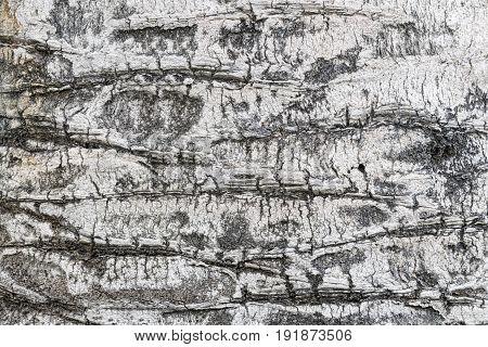 Tree Bark Texture On White Wood