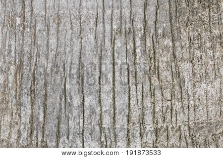 Tree Bark Wood Texture With Light Color