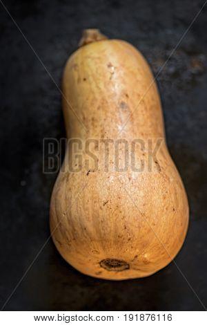 Butternut squash pumpkin on dark vintage background
