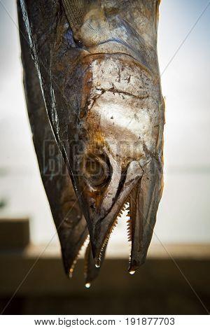 sun dry mackerel fish in prachuap khiri khan southern of thailand