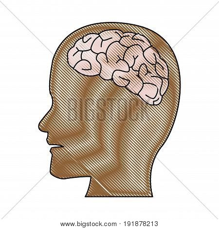 human brain medical schematic anatomy vector illustration