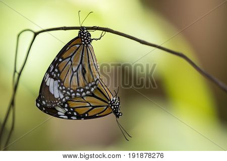 Image of a butterfly on nature background. Insect Animal