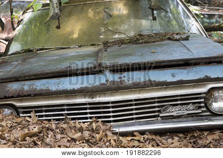 Atco New Jersey - June 18 2017 : Chevrolet in junkyard covered in dry autumn leaves.