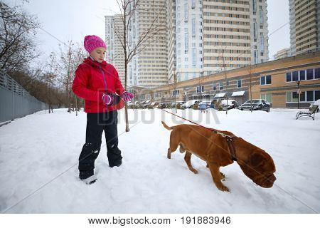 Girl walks with brown dog on snow at wniter day near building