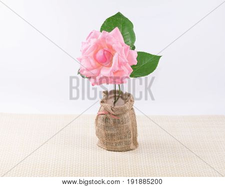 Beautiful  pink rose isolate with white background.