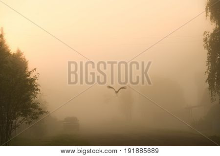 White Stork At Dawn, Flies Through The Village In The Fog