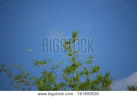 Green Leaf Bamboo Tree With Blue Sky Background