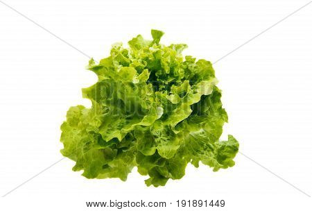 Lettuce leaves vegan food on white background